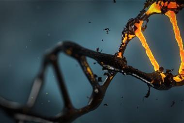 Nemodifikujte lidská embrya, varuje vědce Světová zdravotnická organizace