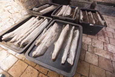 Archeologové: Dřevěná studna nalezená u Pardubic je nejstarší na světě