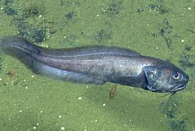 V oceánu bez kyslíku našli biologové bující život. Naznačuje, jak budou moře vypadat v budoucnu