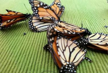 Hmyz po celém světě vymírá. Podle biologů hrozí kolaps přírody