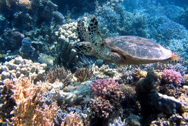 Korálové útesy v Rudém moři jsou nečekaně odolné. Izraelští vědci našli jejich evoluční trik