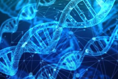 Čeští vědci vytvořili přepínač DNA, který umí vypnout vybraný gen. Může pomoci v boji s nemocemi