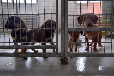 Parvoviróza opět uzavřela psí útulek v Bohumíně. Ruší se i dobrovolné venčení psů