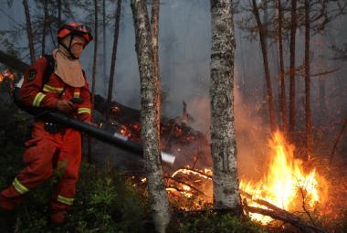Lesy umírají také v Mongolsku. Krizi se snaží předejít brněnští vědci