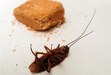 Mrtvý zmagnetizovaný šváb se chová jinak než živý zmagnetizovaný šváb. Byly vyhlášeny Ig Nobelovy ceny