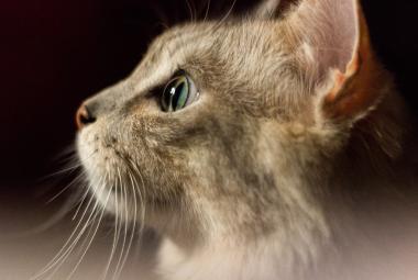 Kočky jsou schopné vytvořit si k lidem podobně silný vztah jako psi nebo děti, tvrdí výzkum