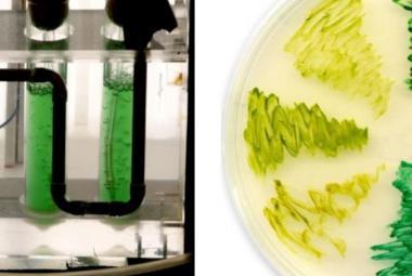 Evropský grant pro českou vědu. Mikrobiolog Komenda bude zkoumat, jak vylepšit fotosyntézu