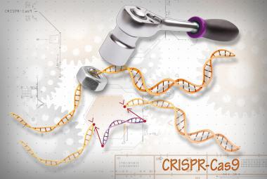 Vědci změnili genetické nůžky na kladivo proti chřipce. Výzkum je v začátku, ale nadějný