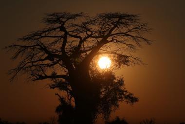 První lidé žili na území současné severní Botswany, tvrdí genetikové