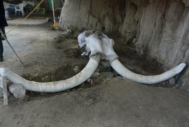 Nález stovek mamutích kostí v Mexiku prokázal, že pravěcí lidé lovili obří zvířata do pastí