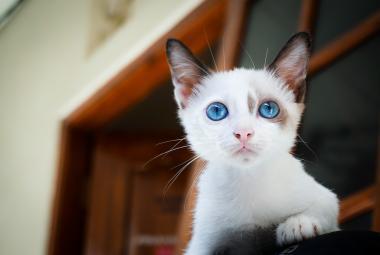 Kočičí emoce umí číst jen 13 procent lidí. Ti jsou v tom ale excelentní