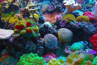 Od Nového roku se na Palau nesmí používat opalovací krémy. Ničily korály
