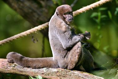 Zoo žádají vládu o peníze na provoz. Jako příspěvkové organizace podporu nedostaly