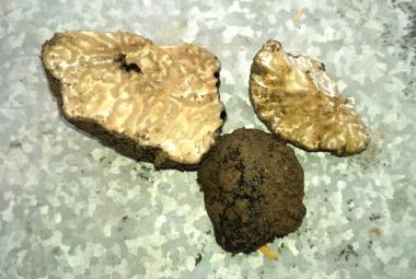 Lanýžová záhada v Brně. Objevili je v záhonech botanické zahrady
