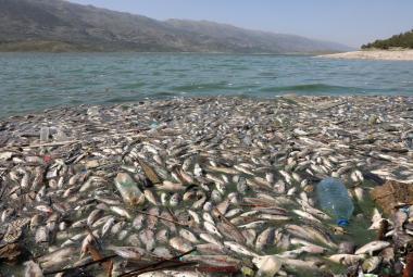 V libanonském jezeře uhynuly desítky tun ryb. Úřady označily za viníka viry