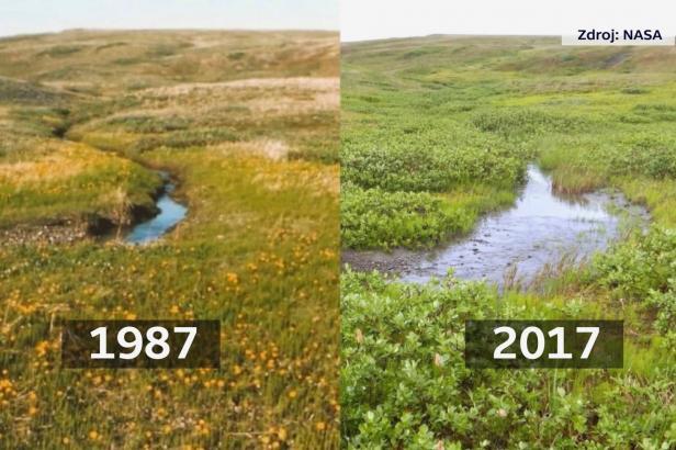 V Arktidě se rychle rodí nový ekosystém, tvrdí vědci. Jehličnany kvůli oteplování migrují na sever