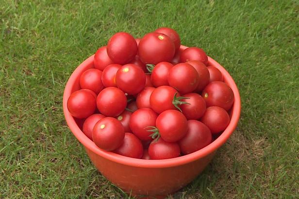 Olomoučtí vědci vyvinuli přípravek, který zvyšuje výnosy zeleniny. Pomaleji stárnou a odolávají suchu