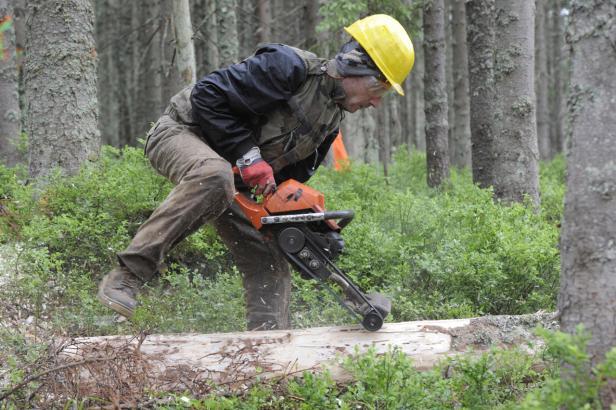 Kůrovcová kalamita patří k nejhorším v historii. Lesy budou šetřit a ministerstvo představilo mimořádná opatření