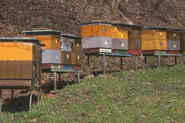 Včelaři jsou naštvaní, že o nich ministerstvo zemědělství zveřejnilo příliš podrobné údaje