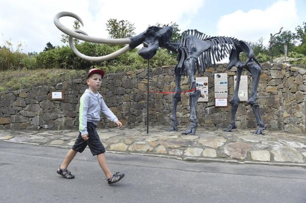 Jak vysoký byl mamut? V ostravské zoo vystavili jeho kostru ve skutečné velikosti