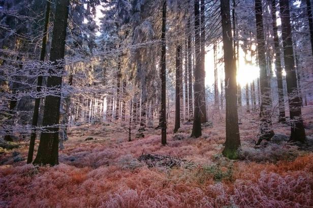 Ani sníh nedoplnil podzemní vody. Na třetině území Česka stále trvá silné sucho