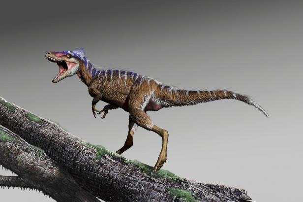 Miniaturní druh tyranosaura nebyl větší než jelen. Ukazuje, jak se z trpaslíků stali obři