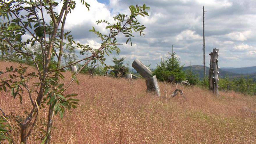 Video Události ČT: Sucho zasáhlo i lesy na Šumavě