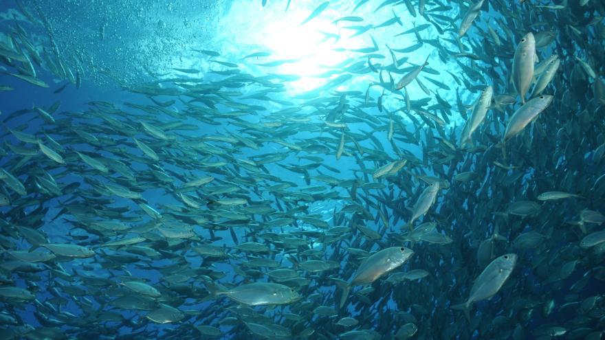 Video Populace mořských živočichů klesla za 45 let o polovinu