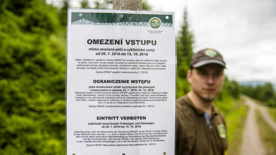 Video V Krkonoších platí omezení vstupu kvůli sběračům borůvek