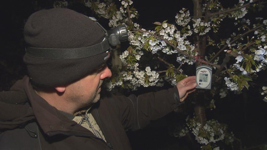 Video UDÁLOSTI: Pěstitelé se snaží předejít škodám způsobeným mrazy