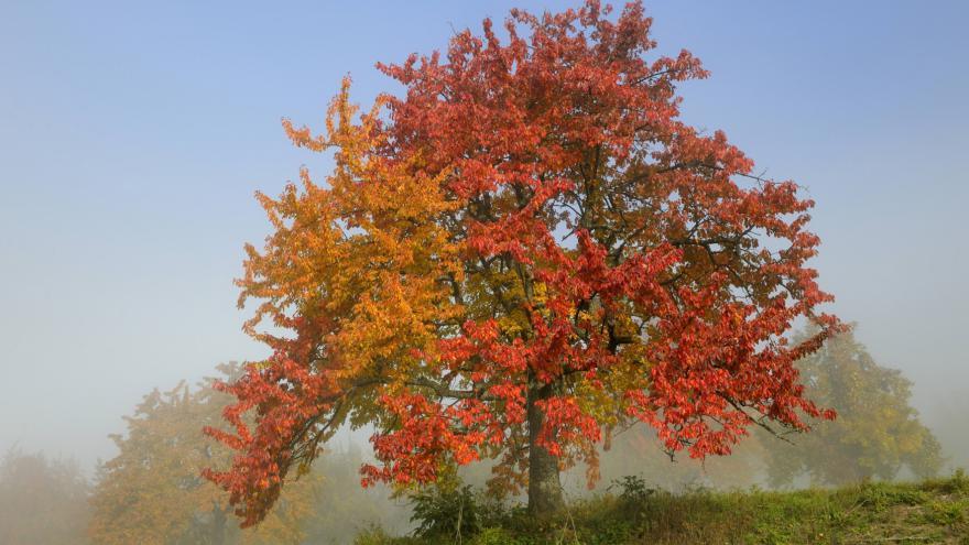 Video Začíná podzim, letos by měl být suchý a teplý