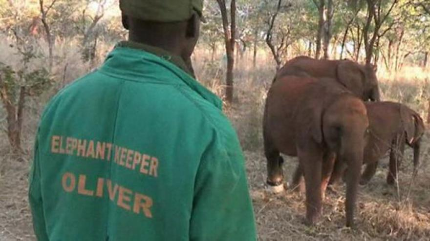 Video Sloní sirotčinec zachraňuje potomky obětí pytláků