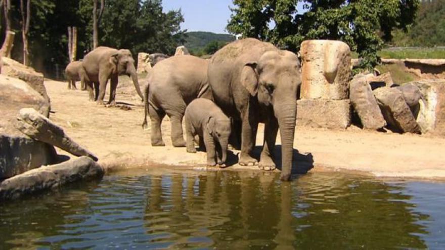 Video Pomoc slonům v Africe
