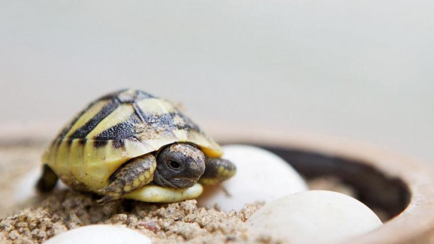 Video Invazivní želvy v Polsku