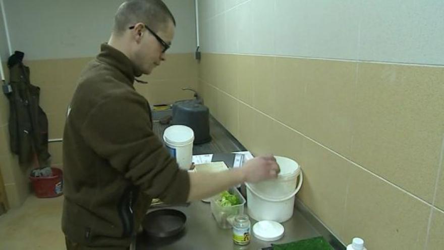 Video NO COMMENT: Péče o mládě jeřába