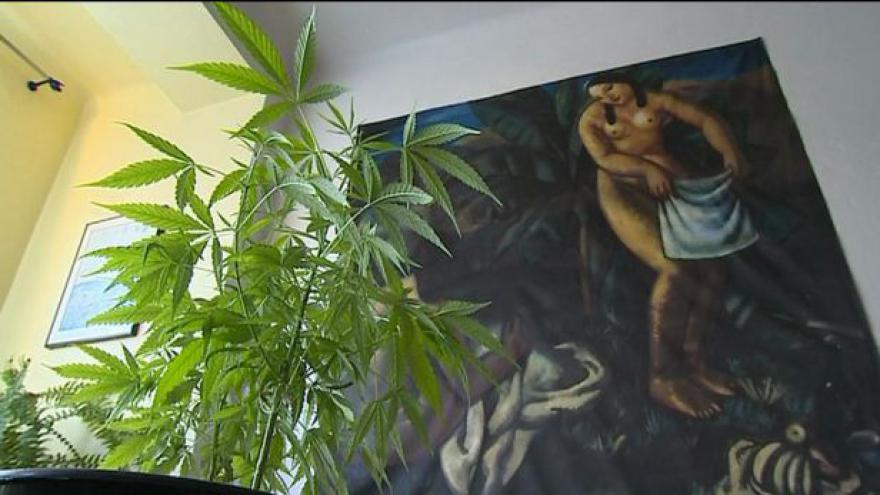 Video Marihuana jako lék ještě letos