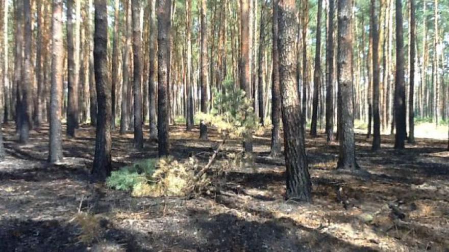 Video Lesy okolo Bzence se vzpamatovávají