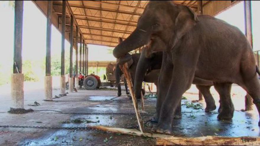 Video Pražská zoo čeká přílet slonic ze Srí Lanky
