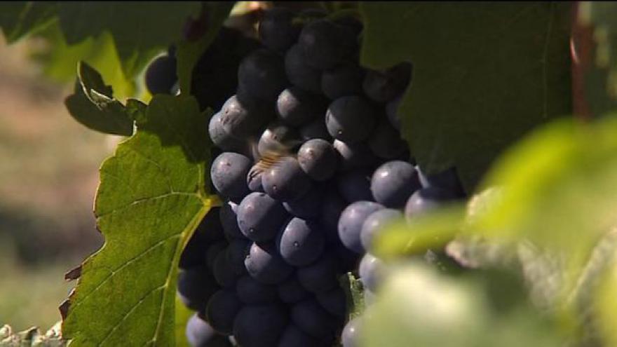 Video Moravští vinaři vyhráli boj o značku BIO