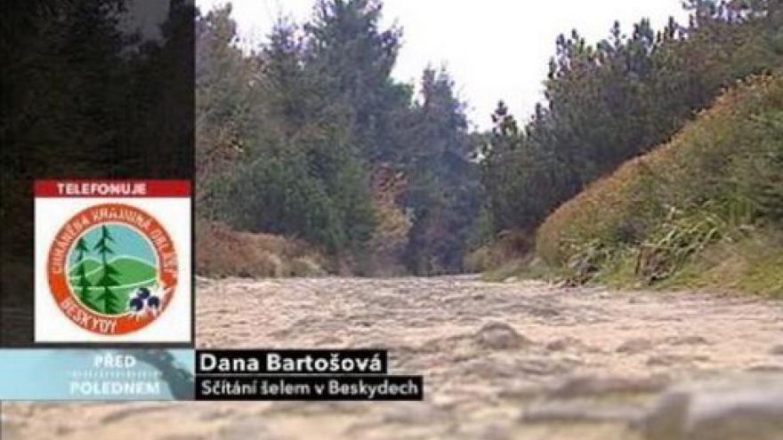 Video Dana Bartošová ve Studiu ČT24