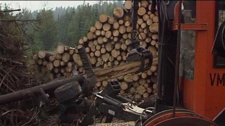Video Lesní tendr