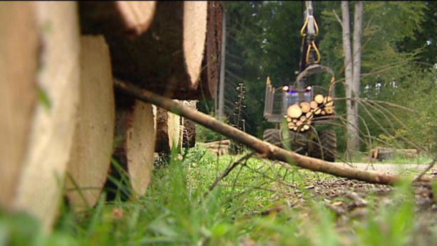 Video Lesy otevíraly obálky