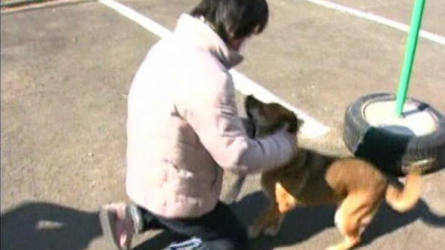 Video Setkání psa s majitelkou