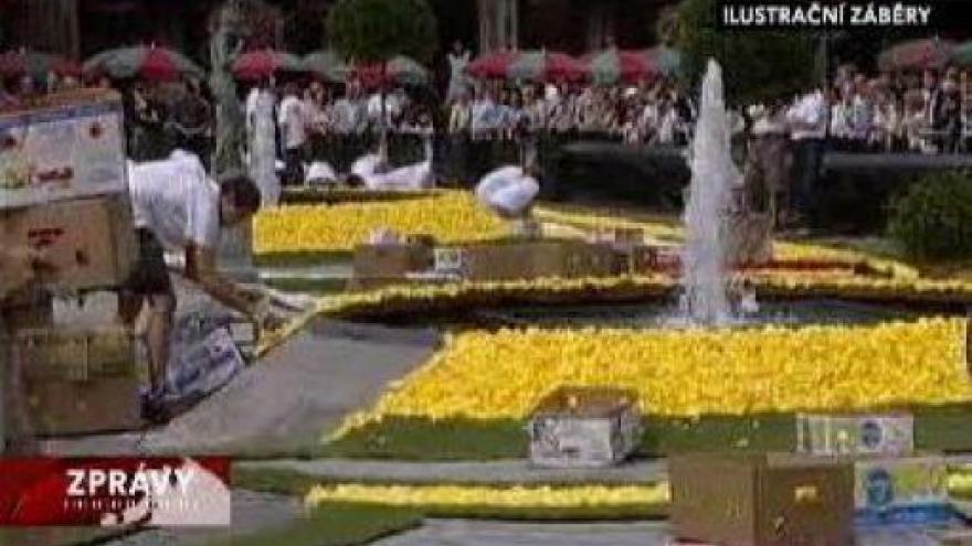 Video Belgický květinový koberec