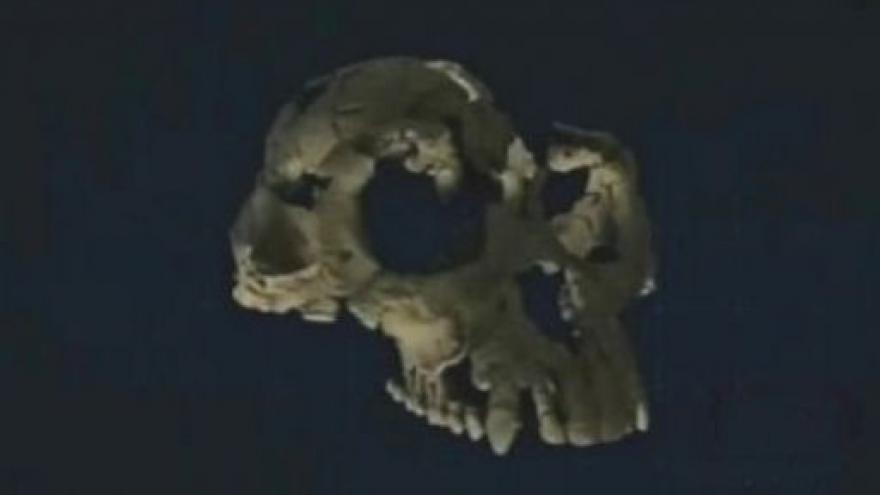 Video Fosílie nejstatršího předchůdce člověka