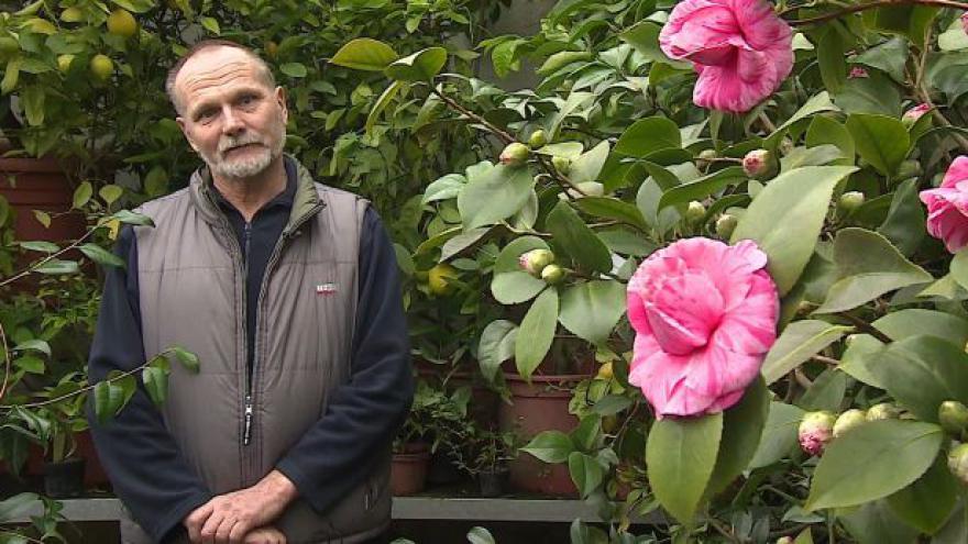 Video O kaméliích hovoří správce zámeckého skleníku Evžen Kopecký