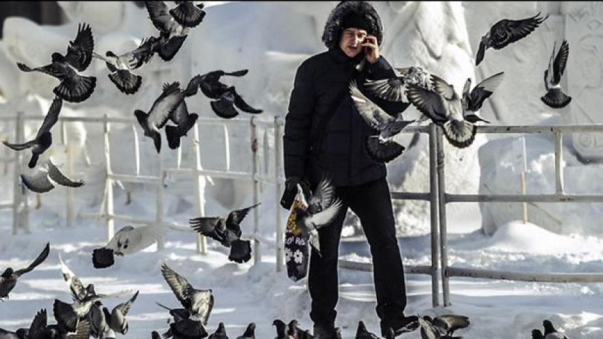 Video Města bojují proti nenápadné hrozbě - holubům
