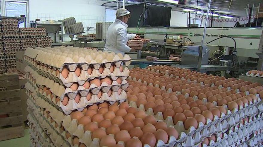 Video Každé páté vejce je z dovozu