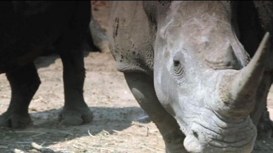 Video Američan zastřelil vzácného nosorožce
