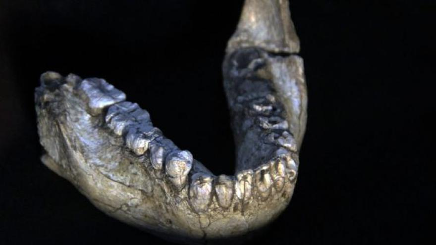Video Antropolog: Ze zubů se dozvíme o naší minulosti hodně